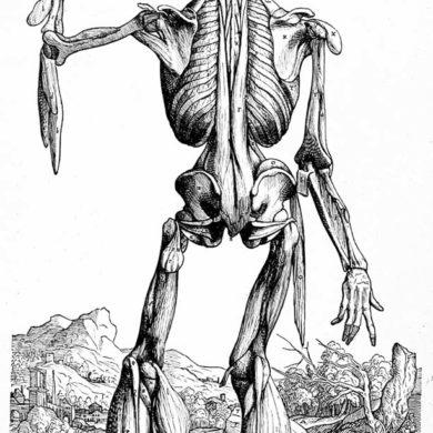 Anatomistudie Andreas Vesaliis, De humani corporis fabrica (1514-64)